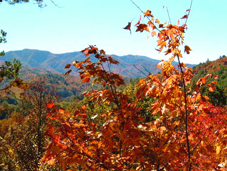 NC Smoky Mountains Fall Leaf Color Season Information. Cabins for rent.