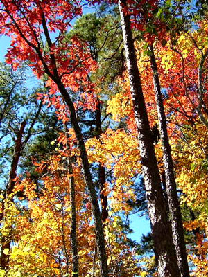 NC Smokey Mountains Fall Leaf Color Season Information.