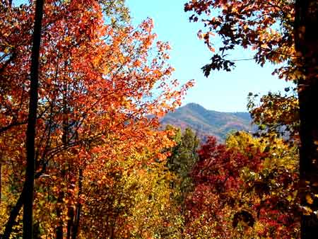 North Carolina Smokies, Smoky, Smokey Mountain Fall Leaf Color Season Information. Log cabin rentals. Cabins for rent.